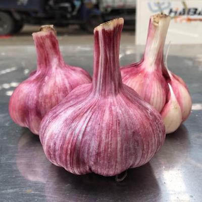 农家自种富硒紫皮新鲜蒜头5斤